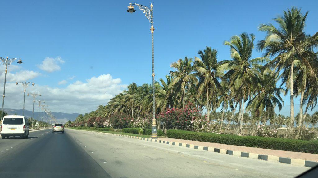 Wakacje życia Oman czyli raj na ziemi Salalah palmy hotel Rotana